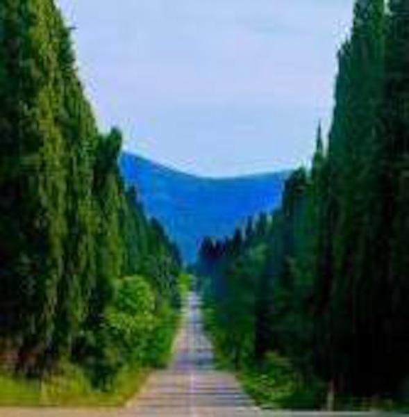 Bolgheri, il Viale dei Cipressi